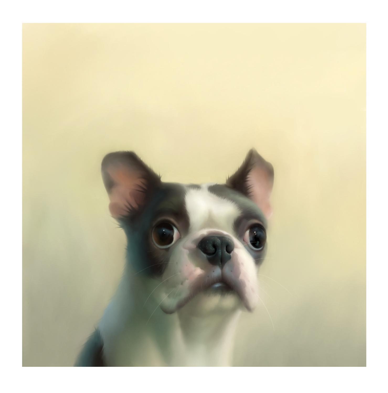 Solomon The Boston Terrier Art Print By Stephen Hanson