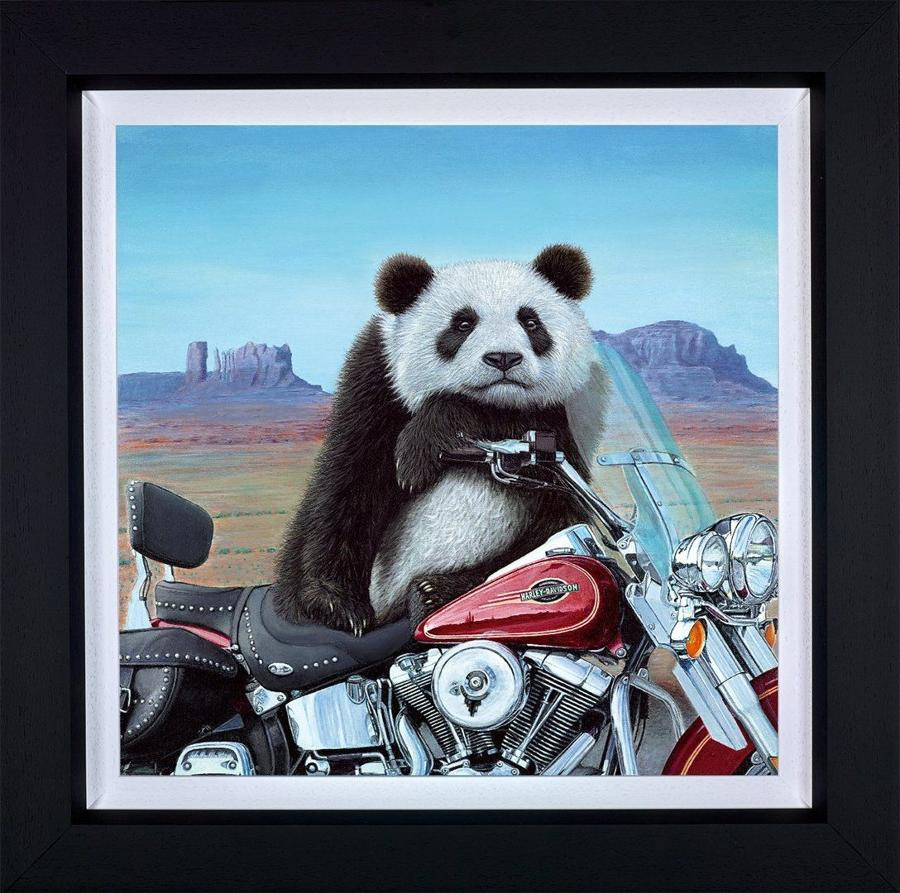 Born to be Wild Framed Canvas Art Print by Steve Tandy
