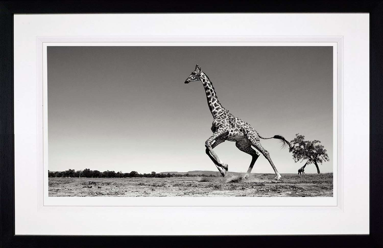 Dance - Framed Photographic Framed Art Print by Anup Shah