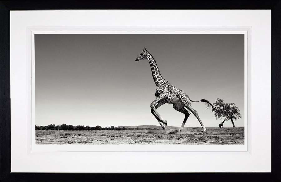 Dance - (Deluxe) - Framed Photographic Art Print by Anup Shah