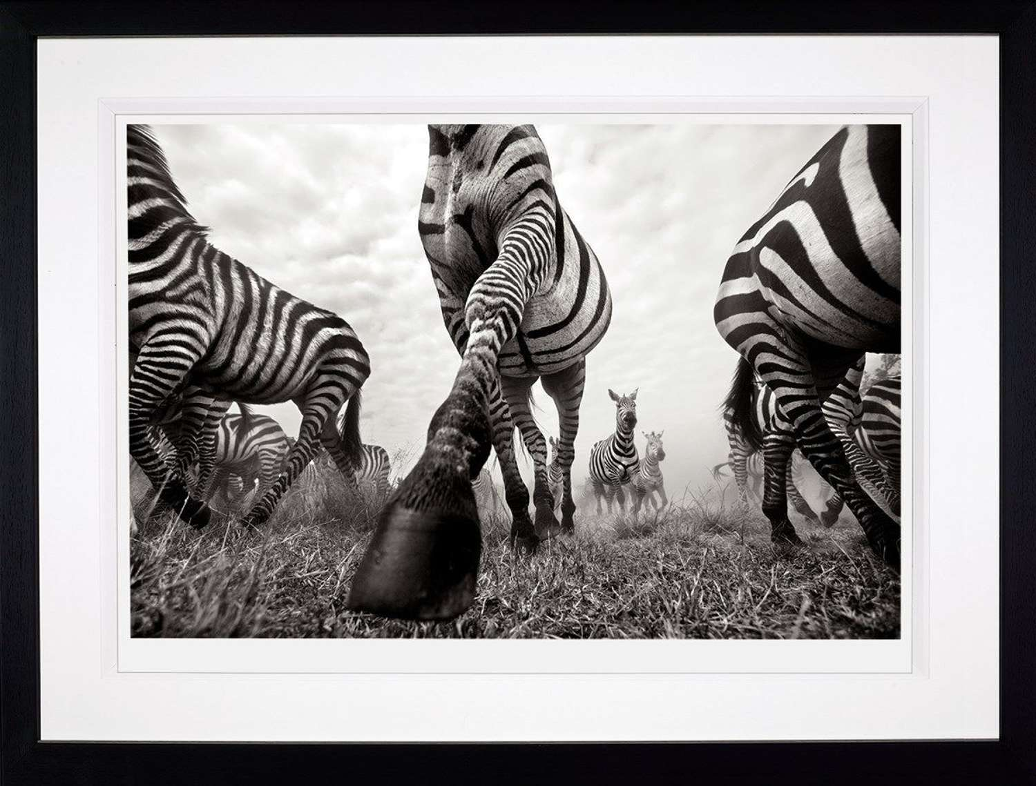 Onward - (Deluxe) - Framed Photographic Art Print by Anup Shah
