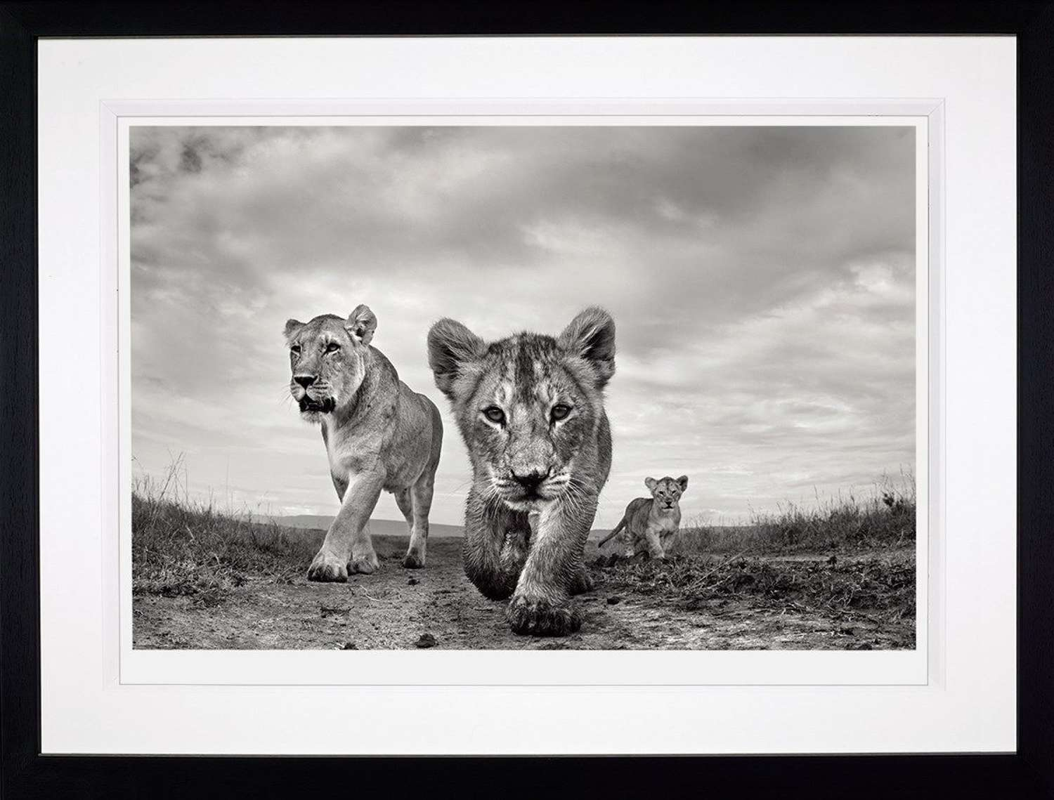 On the Move - (Deluxe) - Framed Photographic Art Print by Anup Shah