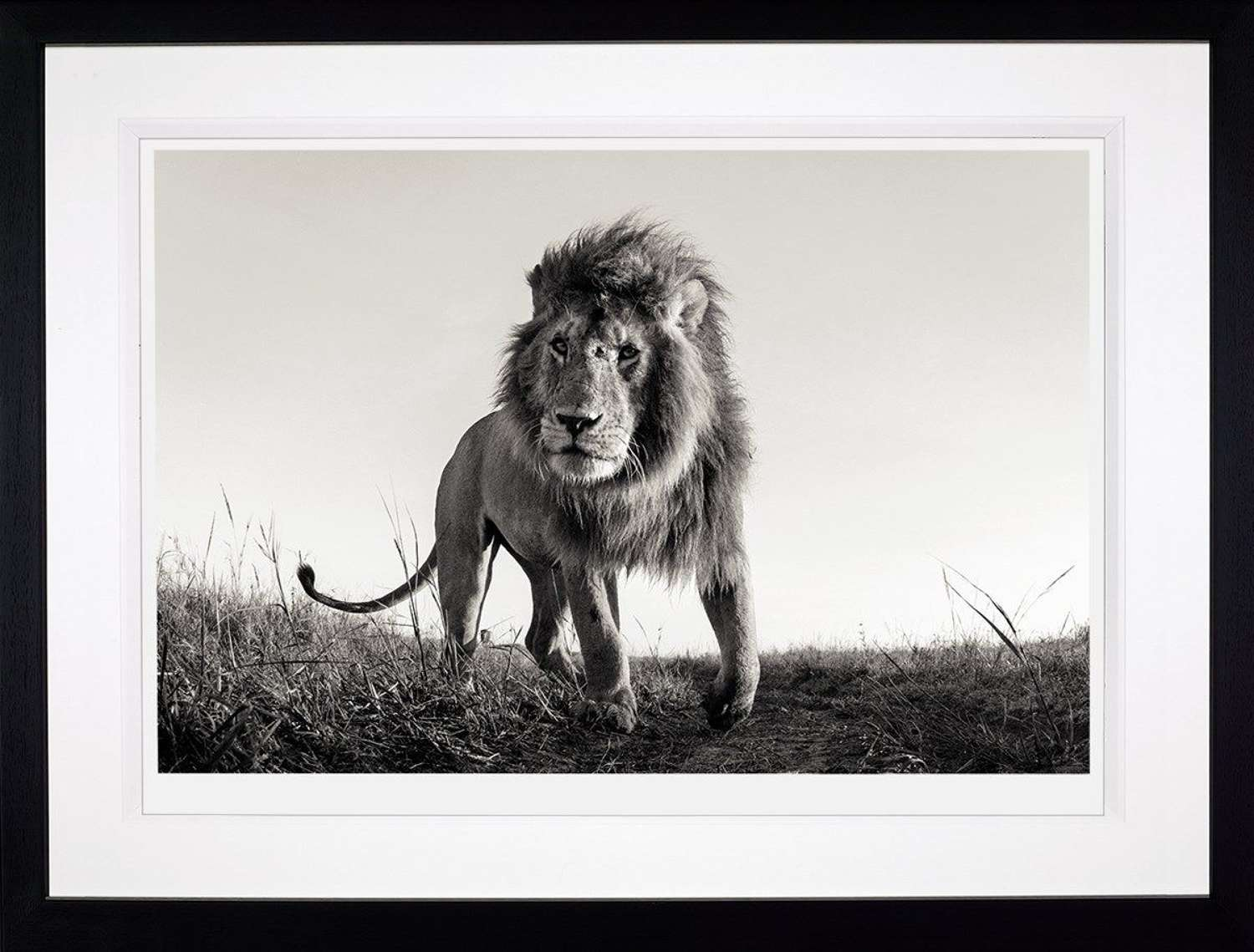 Hunter - (Deluxe) - Framed Photographic Art Print by Anup Shah
