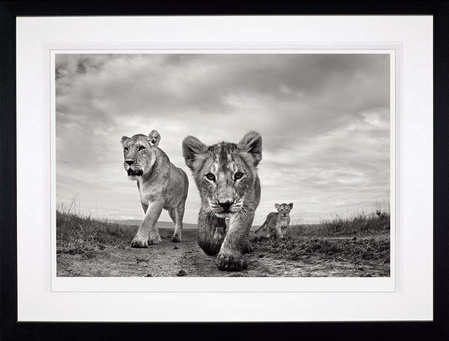 On the Move - Framed Photographic Art Print by Anup Shah