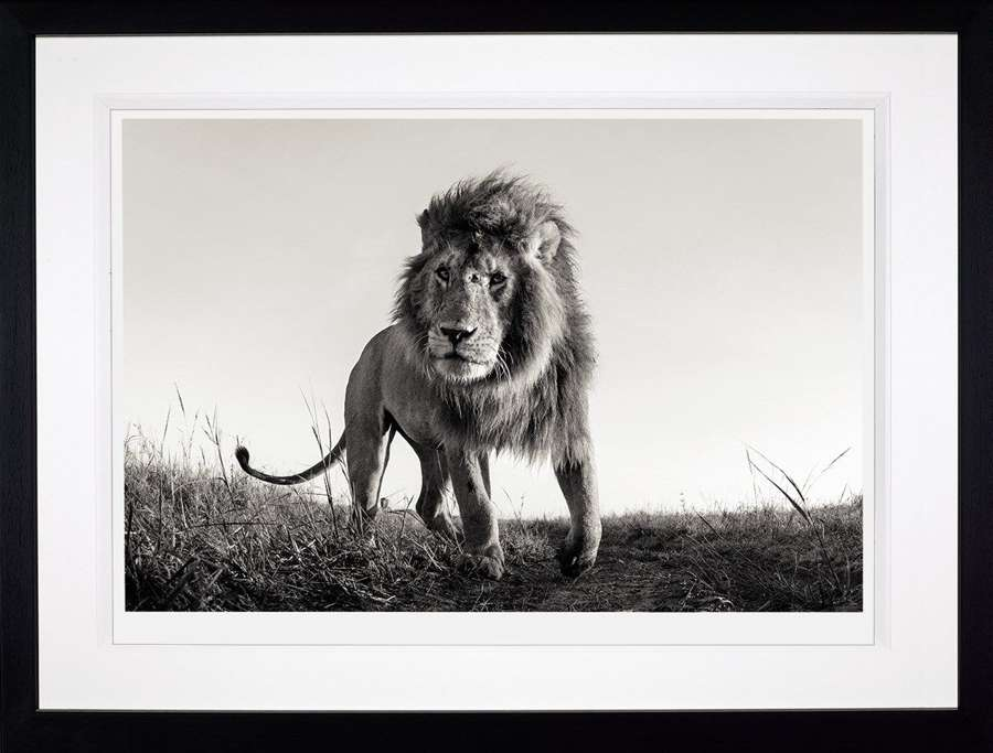 Hunter - Framed Photographic Art Print by Anup Shah