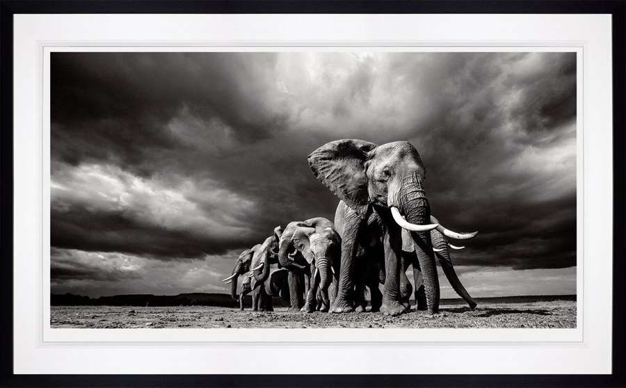 Steadfast - Framed Photographic Art Print by Anup Shah
