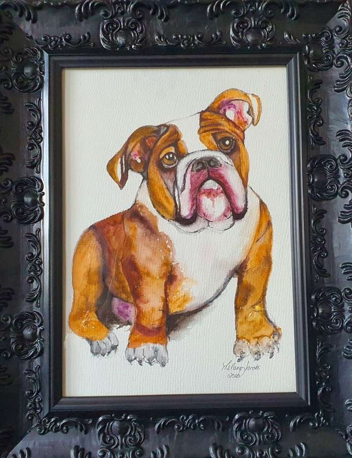 'Hercules The Bulldog' - Original Watercolour By Melanie Jacobs