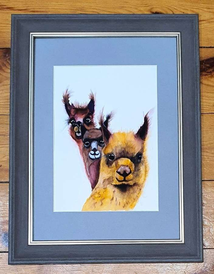Llama Drama ll - Original Watercolour By Melanie Jacobs