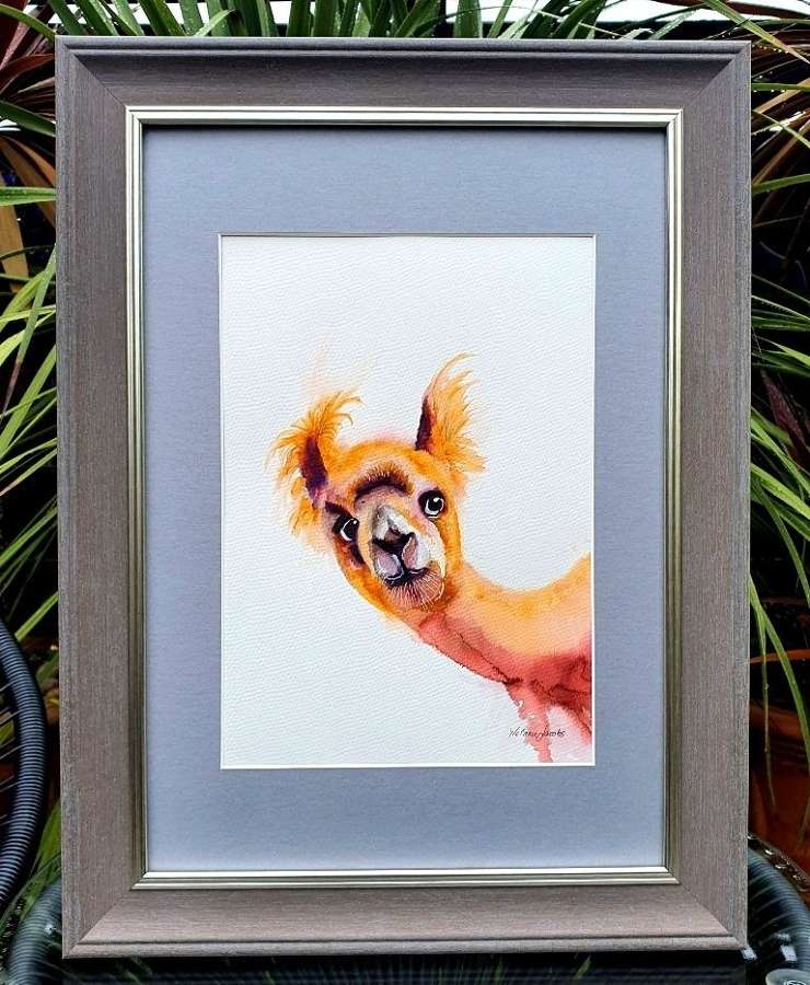 Llama Drama - Original Watercolour By Melanie Jacobs