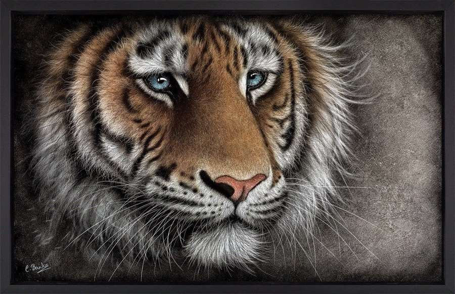 Brave Face - Framed Art Print by Colin Banks