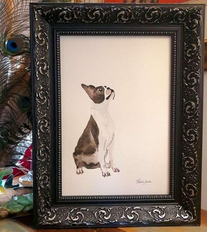 Solomon The Boston Terrier - Original Japanese Ink By Melanie Jacobs